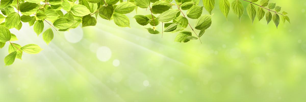 Hintergrund Frühling mit grünen Blättern