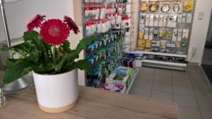 im Vordergrund eine Rosa Blume im Topf, seitlich Blick auf Regal mit EDV Kabeln und Druckertintenpatronen, dazwischen ein Birkenstamm